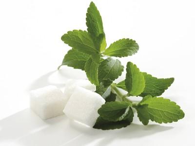 Stewia jako remedium na otyłość – relacja z konferencji Stevia Tasteful 2014